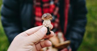 На Волині та Рівненщині семеро людей отруїлись грибами
